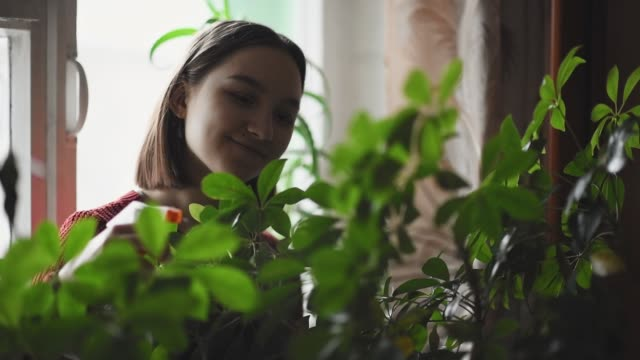 stockvideo's en b-roll-footage met gelukkig jong meisje water geven groene planten thuis - kamerplant