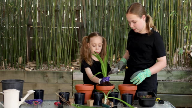 happy young sisters gardening together - bamboo plant stock videos & royalty-free footage