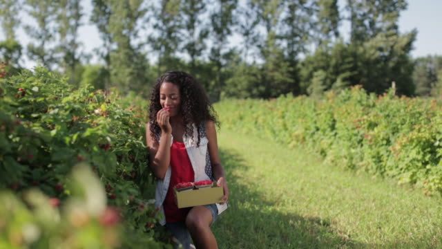 happy young woman eating fresh raspberries while harvesting on field - harvesting stock videos & royalty-free footage