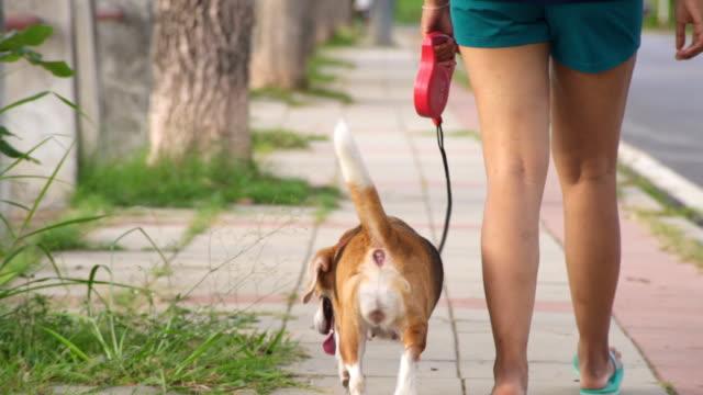 felice giovane donna fare jogging con un cane in un parco - guinzaglio per animale video stock e b–roll