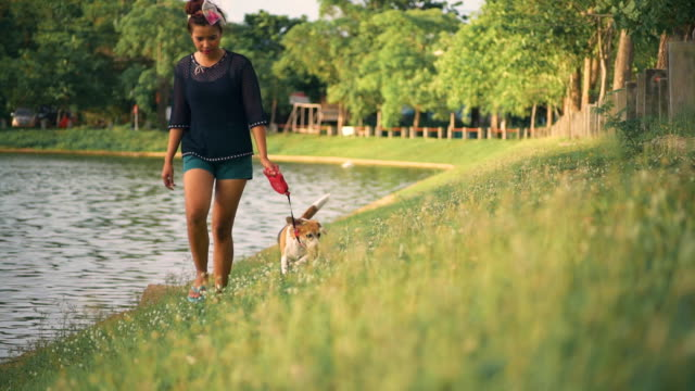 vídeos de stock e filmes b-roll de mulher jovem feliz com cão de estimação jogging no parque - trela de animal de estimação