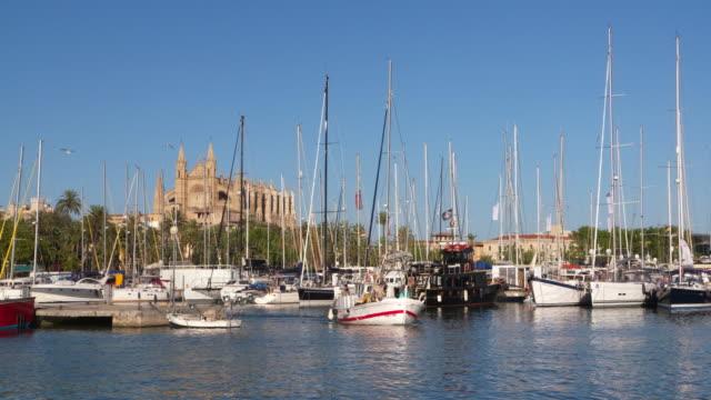 harbor of palma de mallorca and la seu cathedral. palma de mallorca, majorca, balearic islands, spain - palma video stock e b–roll