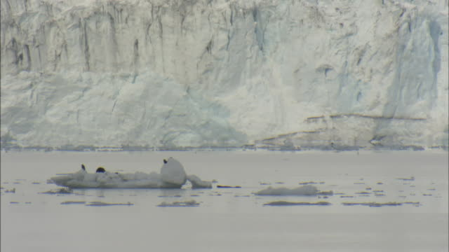 a harbor seal plays in the icy waters of prince william sound, alaska. - prince william stock videos & royalty-free footage