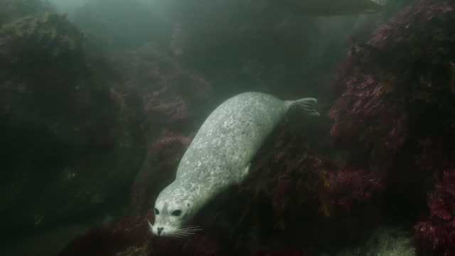 harbour seal - harbour seal stock videos & royalty-free footage