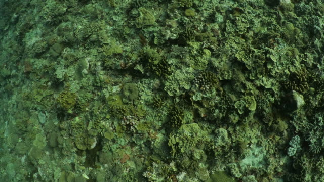 hard coral colony at deep sea in taiwan - scuba diver point of view stock videos & royalty-free footage