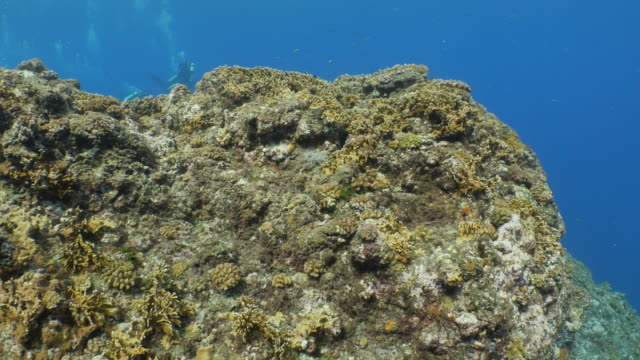 hard coral colony at deep sea reef in taiwan - philippine sea stock videos & royalty-free footage