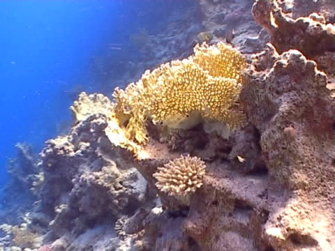hard coral in beautiful light, tracking shot - hard coral stock videos & royalty-free footage