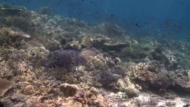 hard coral reef filled with sunlight and life 2 - hard coral stock videos & royalty-free footage