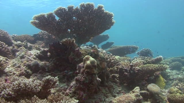hard coral - hard coral stock videos & royalty-free footage