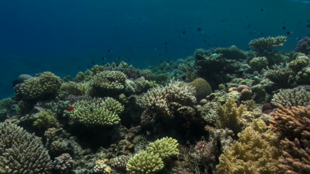 hard corals. these reefs in the gubal straits of the red sea are the most northerly coral reefs and have some of the best examples of reef building species. - hard coral stock videos & royalty-free footage
