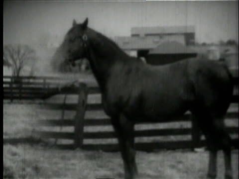 hard tack and man o' war standing and walking around farm / kentucky, united states - 雄馬点の映像素材/bロール