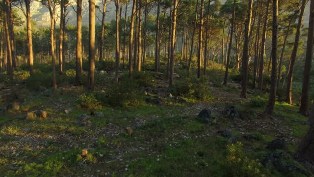 hardwood forest - plant bark stock videos and b-roll footage