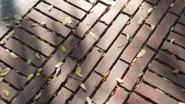 hardwood leaves poured into the road - brick stock videos & royalty-free footage