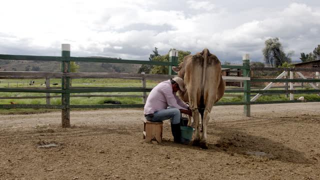 晴れた日に牛を搾乳する勤勉な農家 - 乳搾り点の映像素材/bロール