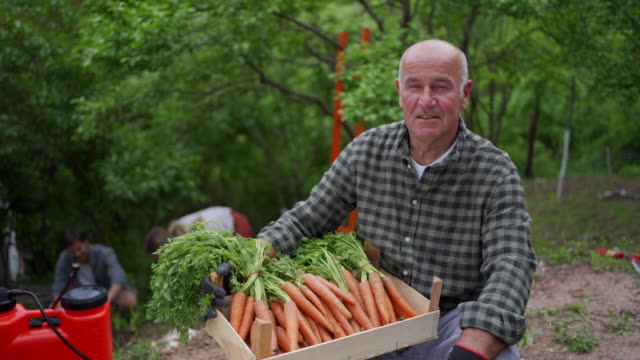 hardworking farmer is smiling after a good harvest of carrots this year - carrot stock videos & royalty-free footage