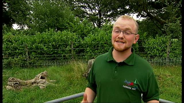 Harland interview SOT Sauna the anteater in enclosure eating ant porridge