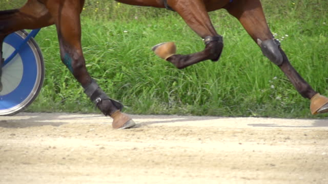 hd super slow mo: harness horse racing - trot animal gait stock videos & royalty-free footage