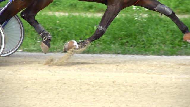 hd-super langsam mo: gurt pferd läuft auf der rennstrecke - huf stock-videos und b-roll-filmmaterial
