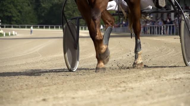 HD SUPER SLOW MO: Harness Horse Training