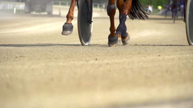 HD SUPER SLOW MO: Harness Horse's Hoofs