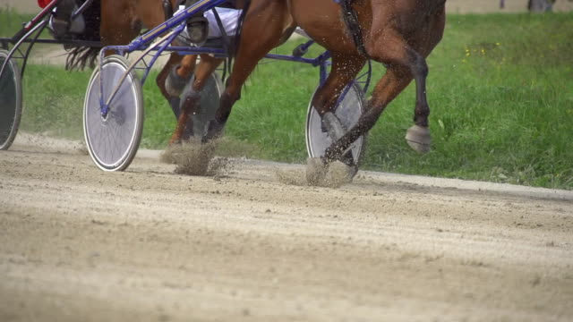 hd super slow mo: harness horses racing - trot animal gait stock videos & royalty-free footage