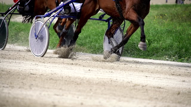hd super slow mo: harness horses racing - animal harness stock videos and b-roll footage