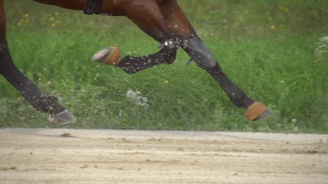 hd super slow mo: harness racing along racecourse - trot animal gait stock videos & royalty-free footage