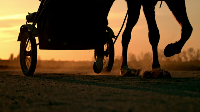 slo mo harness racing at sunset - horse cart stock videos and b-roll footage