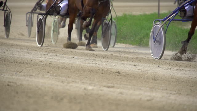 hd super slow mo: harness racing - gallop animal gait stock videos & royalty-free footage