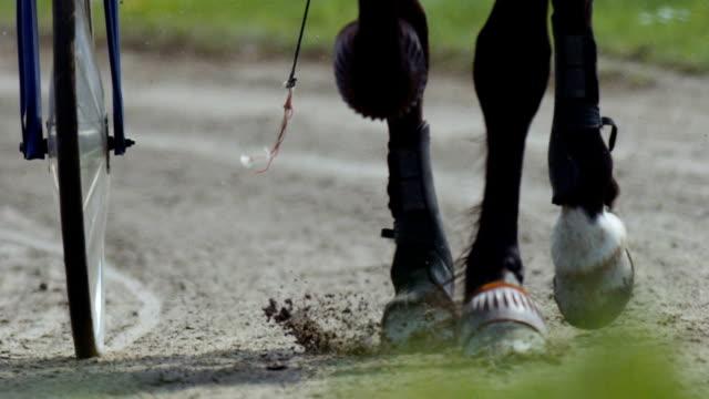 Harness racing (slow motion)