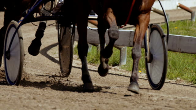 harness racing (slow motion) - horse racing stock videos & royalty-free footage