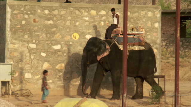 a harnessed elephant carries a rider down a rural street in india. available in hd. - non urban scene stock videos & royalty-free footage