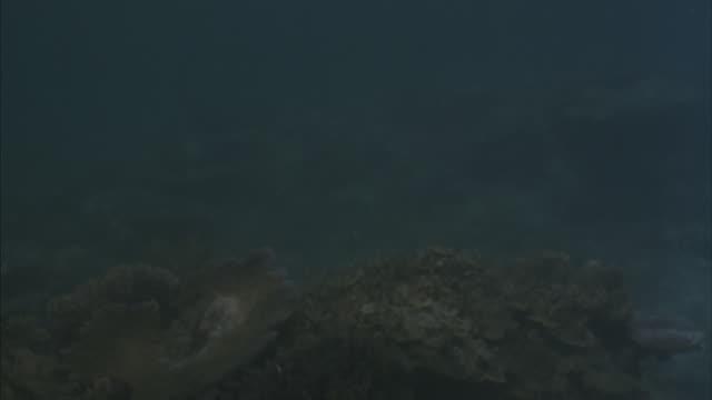 a harpoon kills a fish underwater. - harpoon stock videos and b-roll footage
