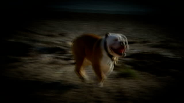 redknapp cleared of tax fraud graphicised sequence reconstruction bulldog running on beach - ハリー レッドナップ点の映像素材/bロール