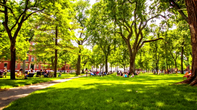 harvard yard and university - harvard university stock videos & royalty-free footage