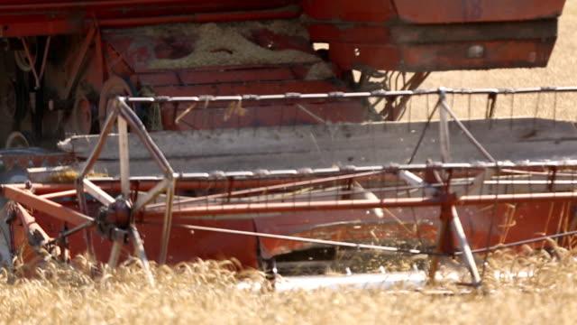 stockvideo's en b-roll-footage met harvest harvester - volkorentarwe