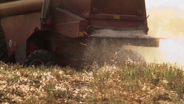 harvest of colza - poland stock videos and b-roll footage