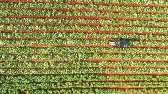 harvest scene with a tractor on radish field / pyeongchang-gun, gangwon-do, south korea - farm worker stock videos & royalty-free footage