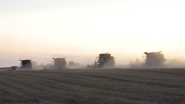 harvest season. group of combine harvesters gathering the wheat crop in the agricultiral field after sunset in summer. agricultural equipment in cultivated land. - combine harvester stock videos & royalty-free footage