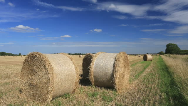 harvest straw bales, fenland fields, cambridgeshire; england; uk - bale stock videos & royalty-free footage