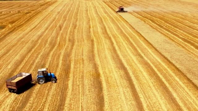 vidéos et rushes de moment de la récolte. la dernière bande sur le terrain de la récolte - en dernier