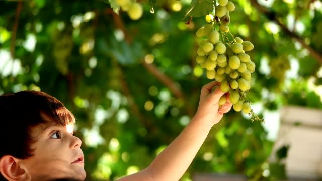 vidéos et rushes de temps de récolte - fruit