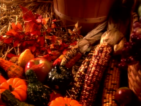 harvest - zucca legenaria video stock e b–roll