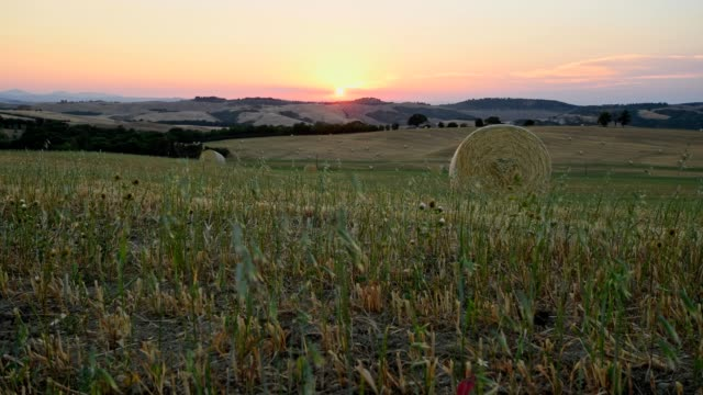 harvested cereal field at sunset in summer, san quirico d'orcia, val d'orcia, siena province, tuscany, italy - hay stock videos and b-roll footage