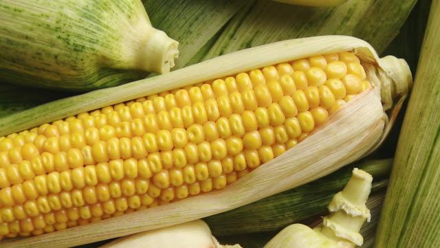 HD: Harvested Corns On The Cob