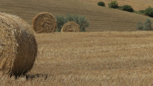 ms pan harvested field with hay bales / tuscany, italy - bale stock videos & royalty-free footage