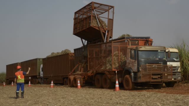 Harvested sugarcane is placed into a truck harvested at a farm about 30 minutes from Biosevs Santa Elisas Mill Sertaozinho State of Sao Paulo Brazil...