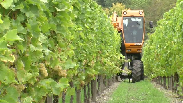 MS Harvester at vineyard / Remich, Moselle, Luxembourg