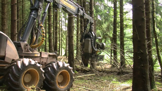 MS Harvester at work in forest / Zerf, Rhineland Palatinate, Germany