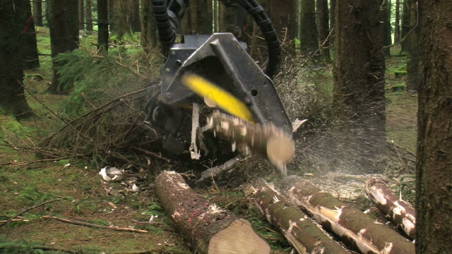 vidéos et rushes de  ms harvester at work in forest / zerf, rhineland palatinate, germany - tronc d'arbre